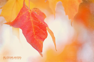 ~ fall colors ~ | by denisemasygaphotography