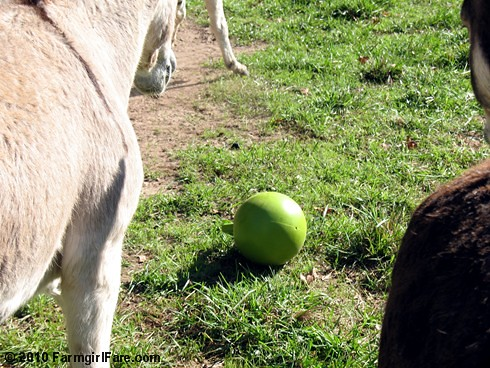 Donkey Ball 1 | by Farmgirl Susan