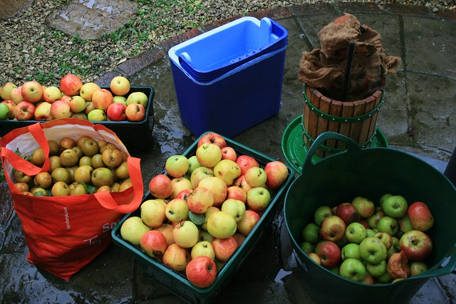 Cidermaking at home, 2010