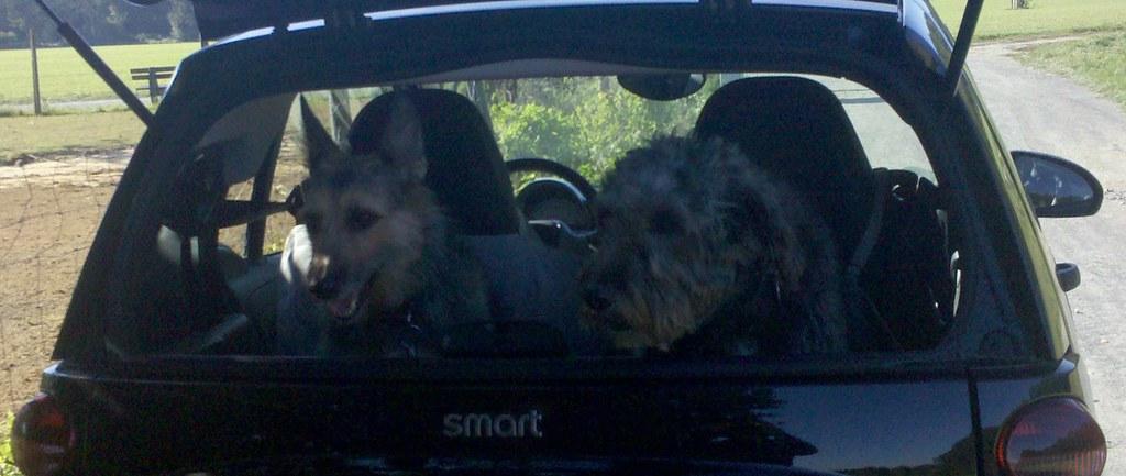 Dog S Driving Car S Owner Drunk Memes
