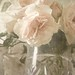~Roses w/Texture~