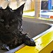 Kitty Cat Bath Time