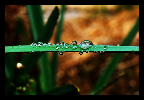Dew Drops V | by The Aberrant Eye