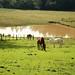 Uma bela paisagem de campo e cavalos!!