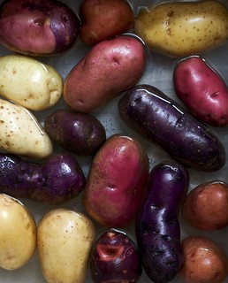 Colorful Heirloom Potatoes | by Chiot's Run