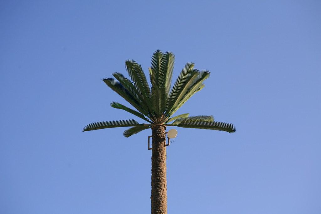 satellite palm tree