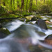 OCONALUFTEE SPRING -- Great Smoky Mountains, NC
