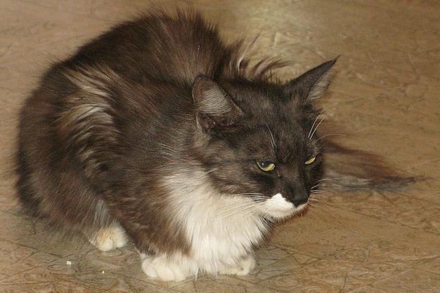 hasbro lifelike cat