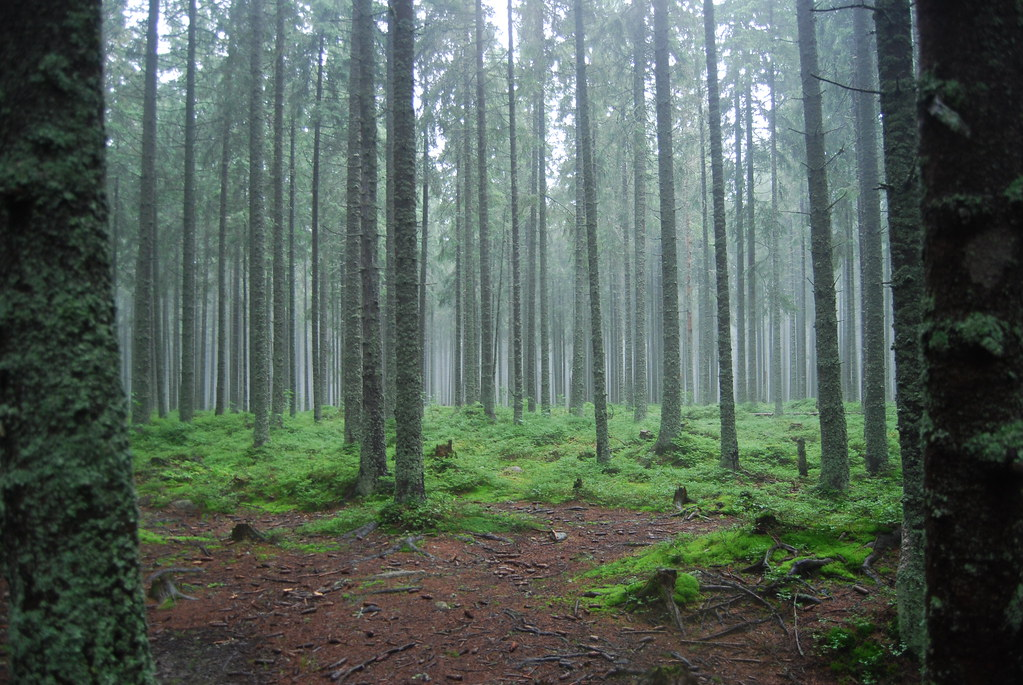 eerie forest fog | yeahhh explore #400!!! | Alicja Zak ...