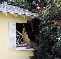 Massive Tree Crashes into Granada Hills Home