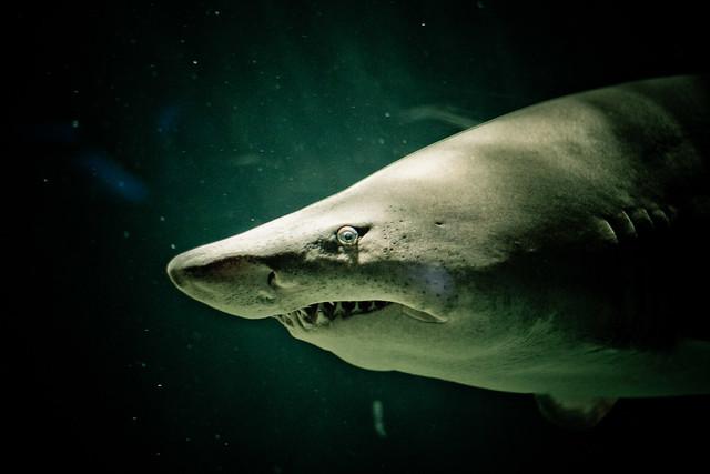 Shark National Aquarium Flickr Photo Sharing