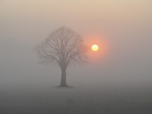 Sunrise with Tree | by h.koppdelaney