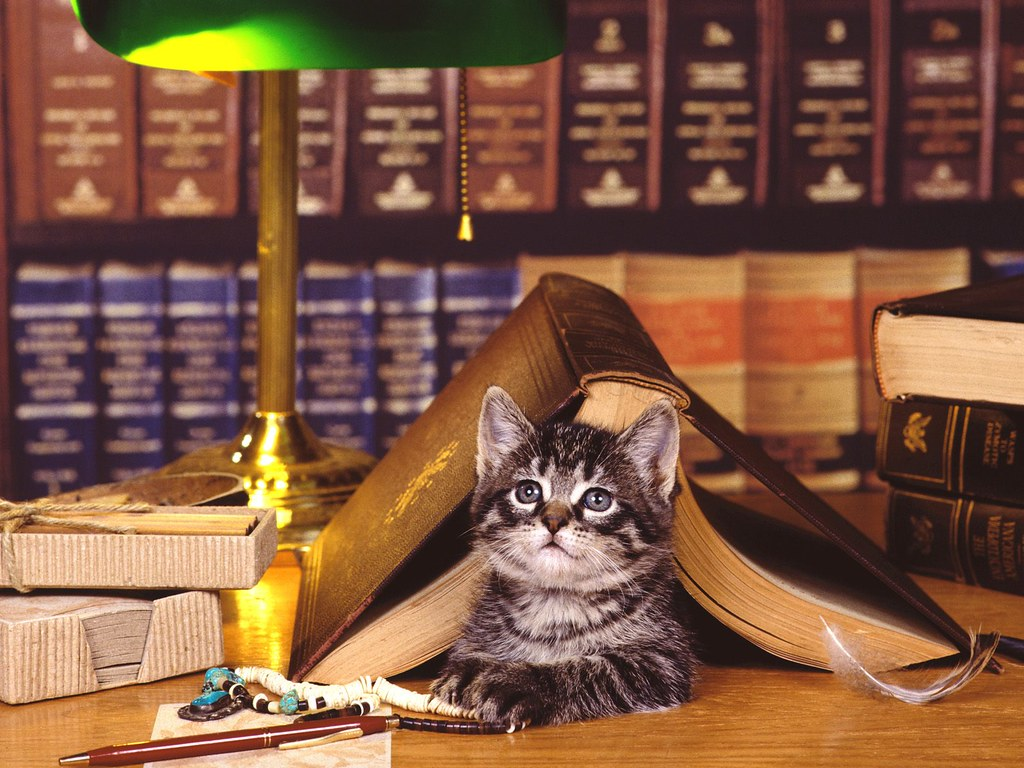 kitten, cat, adorable, fluffy animals, cute cat, reading, books, library, shelves, lamp, book love, book nerd, bookish, amreading,