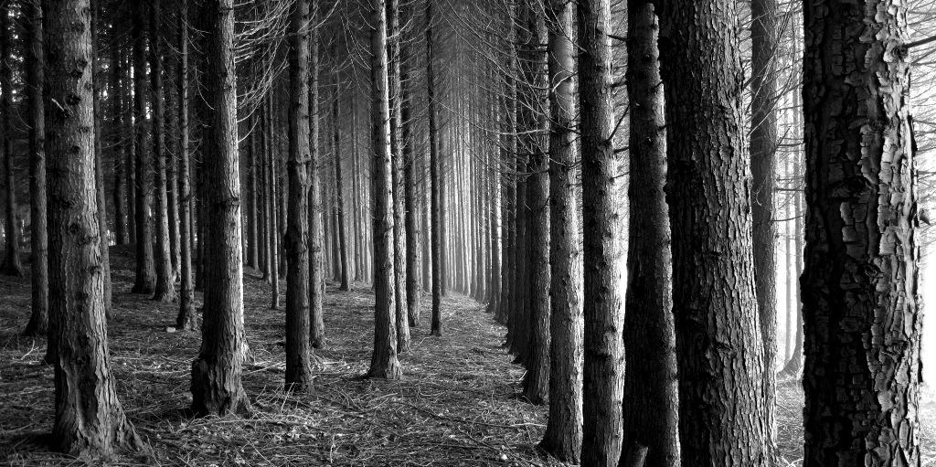 En el bosque - 1 5