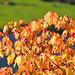Autumn Inkling