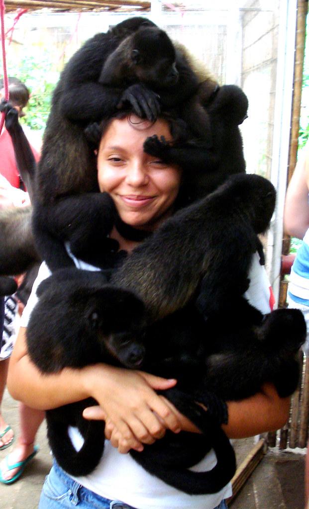 Howler Monkey Hat Jaguar Rescue Center Playa Chiquita L Flickr
