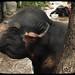 Aged Kodachrome Elephant