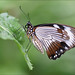 """Butterfly in """"Naturospace"""" 3"""