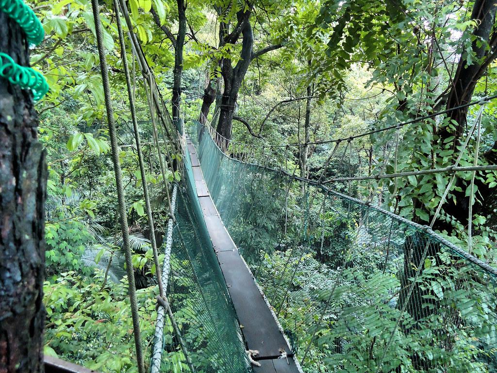 ... Canopy Walk | by nick@ & Canopy Walk | Canopy walk at Forest Research Institute Malayu2026 | Flickr