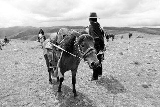 Tibetan Nomad horse | by Falsalama's Tibet