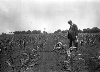 Corn Club boy showing county agent that he had properly cultivated his corn | by State Library and Archives of Florida