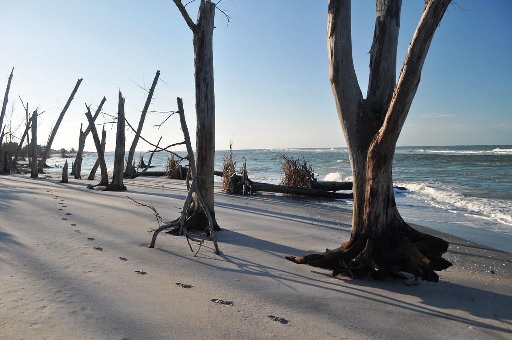Nov. 6, 2010, The Great VISIT FLORIDA Beach Walk - Stump ...