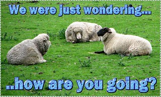 eCard - Love & Friendship - sheep: how are you going | by you get the picture