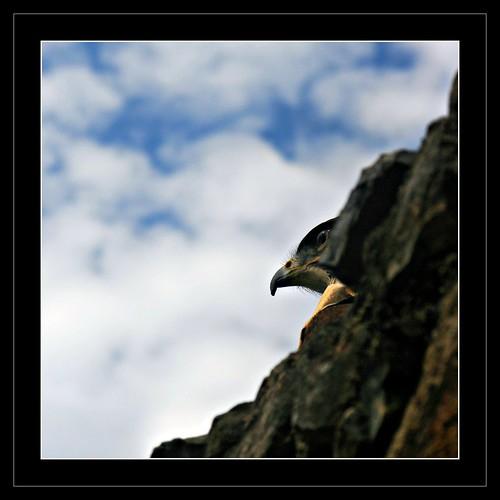 Voir sans tre vu eric bachellier flickr for Fenetre voir sans etre vu