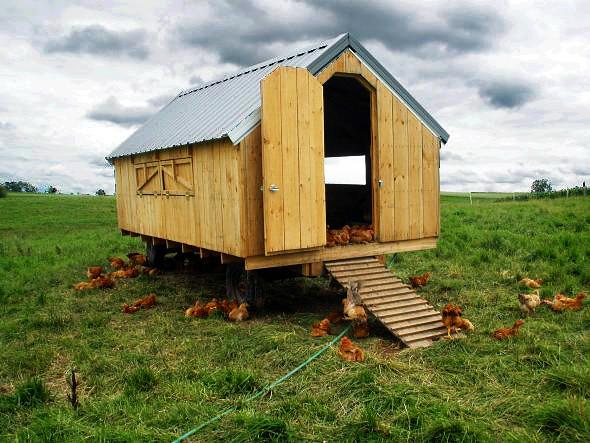Chicken tractor portable chicken coop carnivore locavore for Portable coop