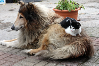 dog and cat | by David Lebovitz