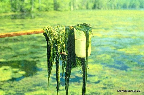 how to get rid of algae in a farm pond