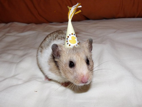 Little Lupin in her Party hat! | by LuLu Witch