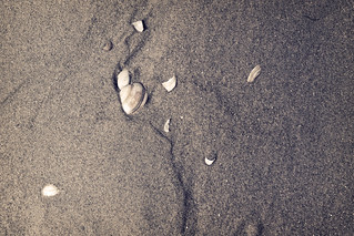 Shells and Sand | by kirberich