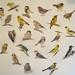 Pettern of Birds