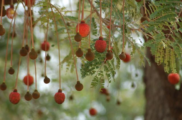 Dawadawa Flowers Hang Like Lanterns The Flowers Of The