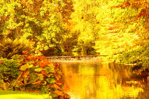 Autumn at Mount Usher Gardens, County Wicklow, Ireland | by rosewoodoil