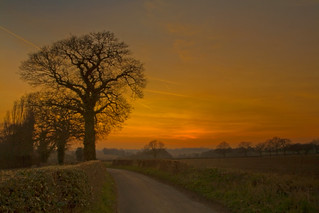 The Oak in the last light | by desimage