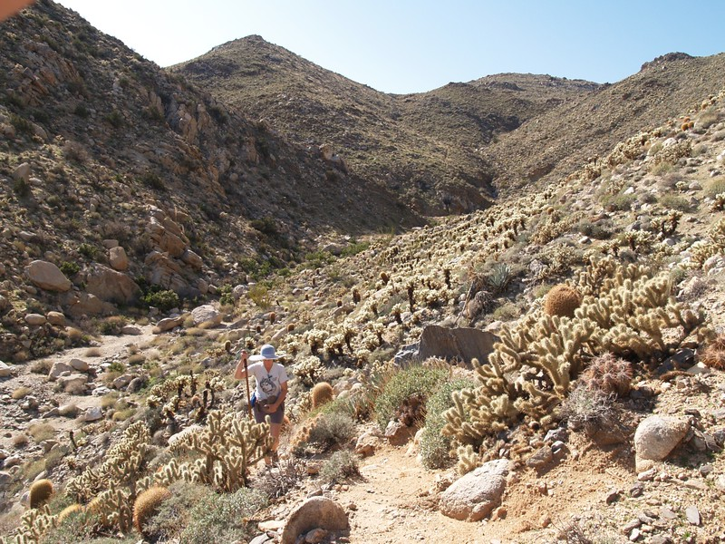 Hiking back through the cholla forest