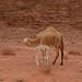 I am brand new in the desert...   3