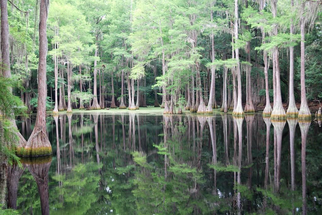Swamp Tours Near Natchez Ms