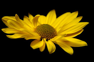 Yellow | by Greg B Photography