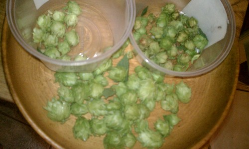 Hop harvest | by Christopher.Johnson