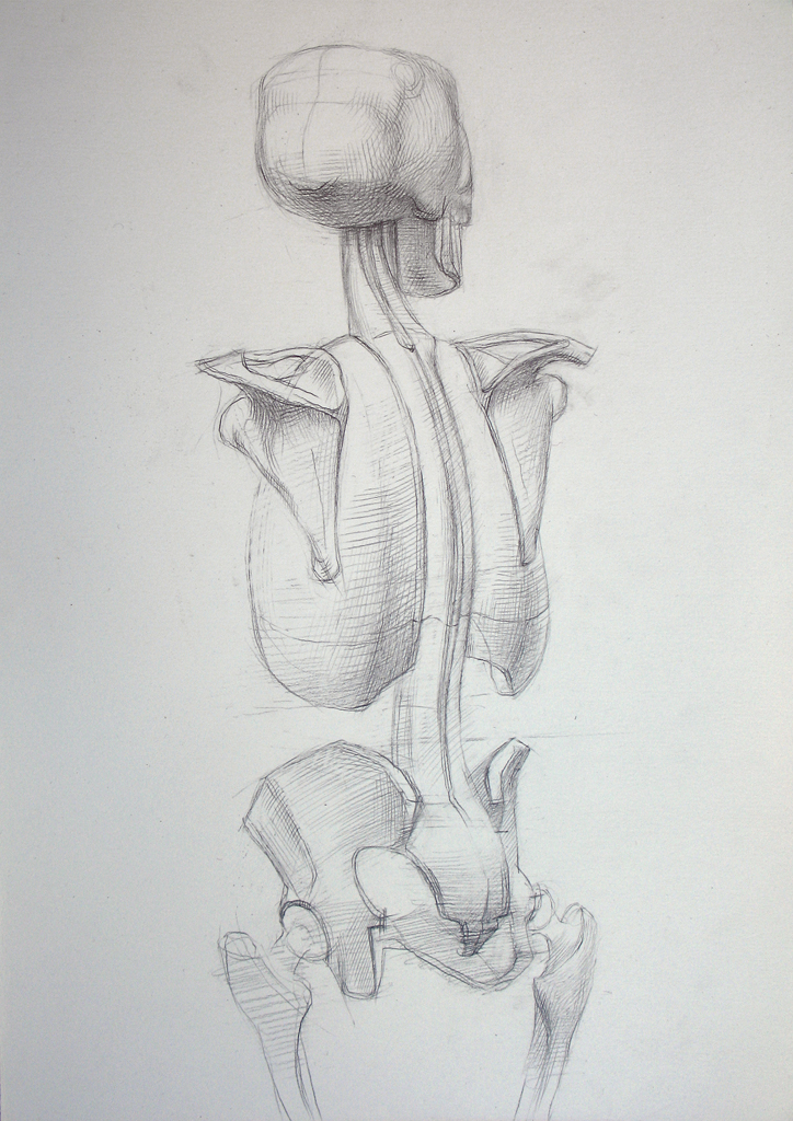 Human Skeleton Back View 2008 Graphite Pencil On Paper Flickr