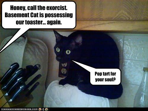 Basement Cat Possess Toaster | Lapus | Flickr