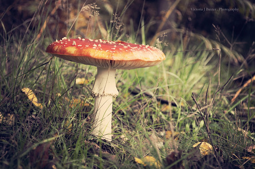 Once upon a time, in a land far away. {Explored...front page} | by Paisley patches