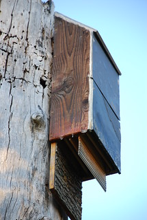 West Bat House 10/13/2010 | by yaquina