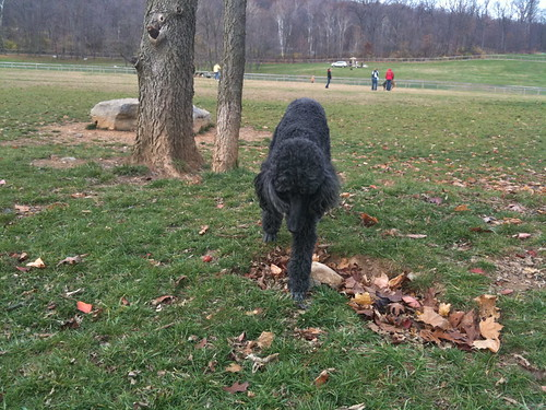 John Rudy Dog Park