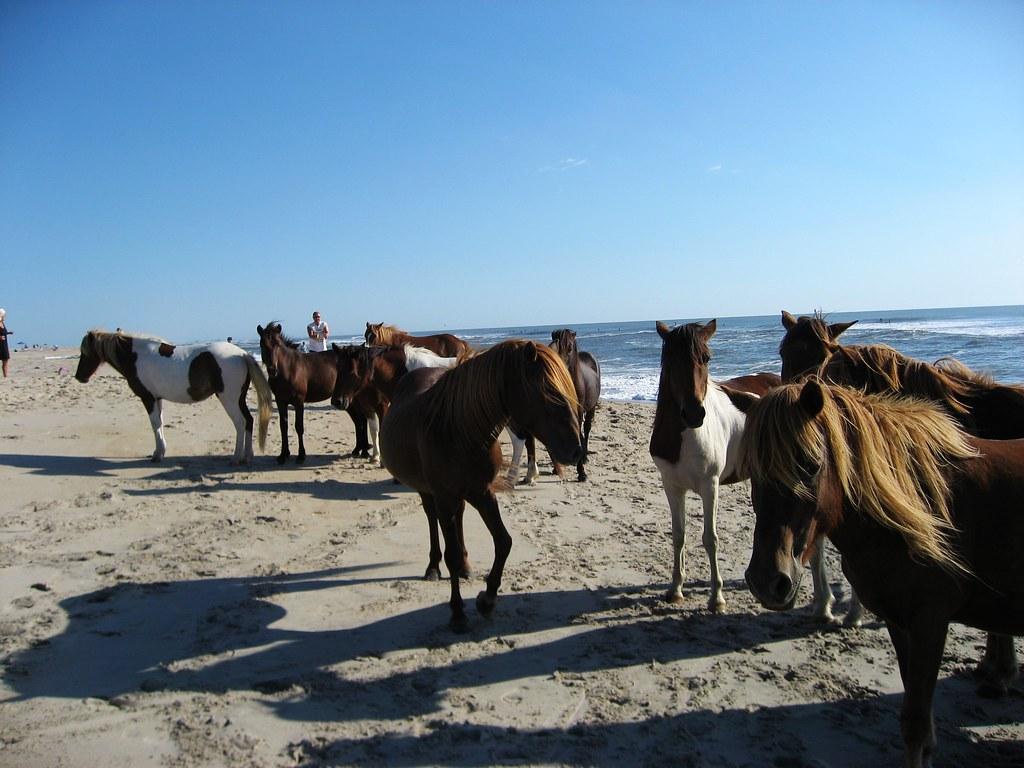 Wild Horse Island Canada