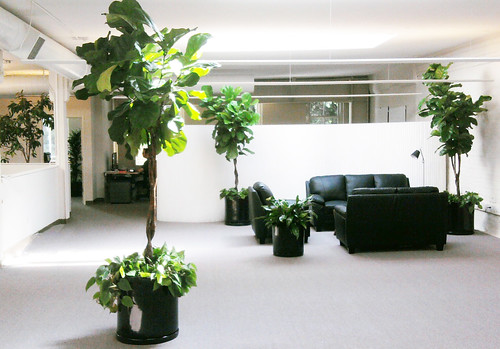 San francisco office plants service office plants for Low maintenance office plants