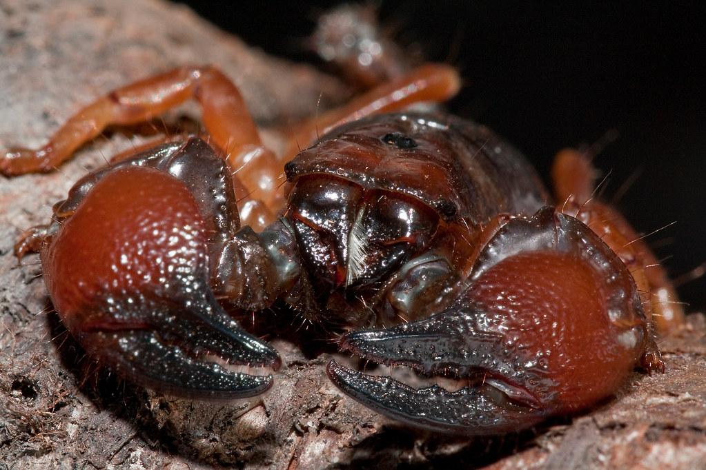 Scorpions - The Scorpion